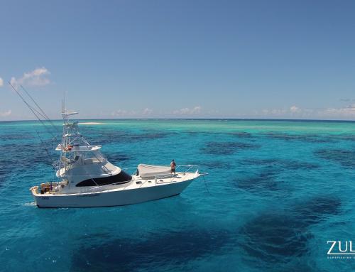 Flinders Reef & Yongala Wreck – Diving