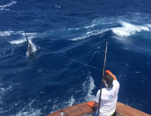 Cairns 50th Marlin Tournament  + Heavy Tackle Fishing Report