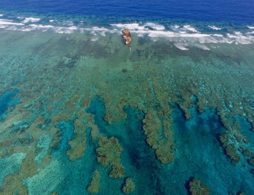 Swains Reef & Coral Sea Expedition 2018